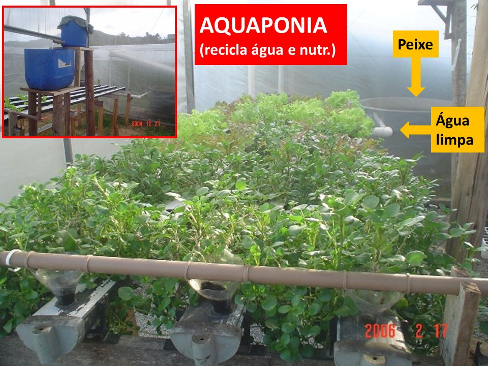 AQUAPONIA (recicla água e nutr.)