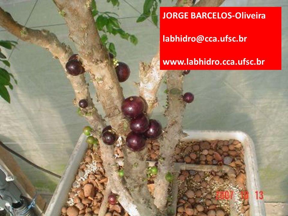 JORGE BARCELOS-Oliveira