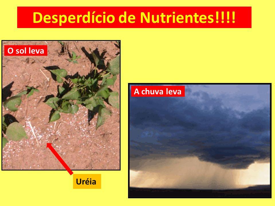 Desperdício de Nutrientes!!!!