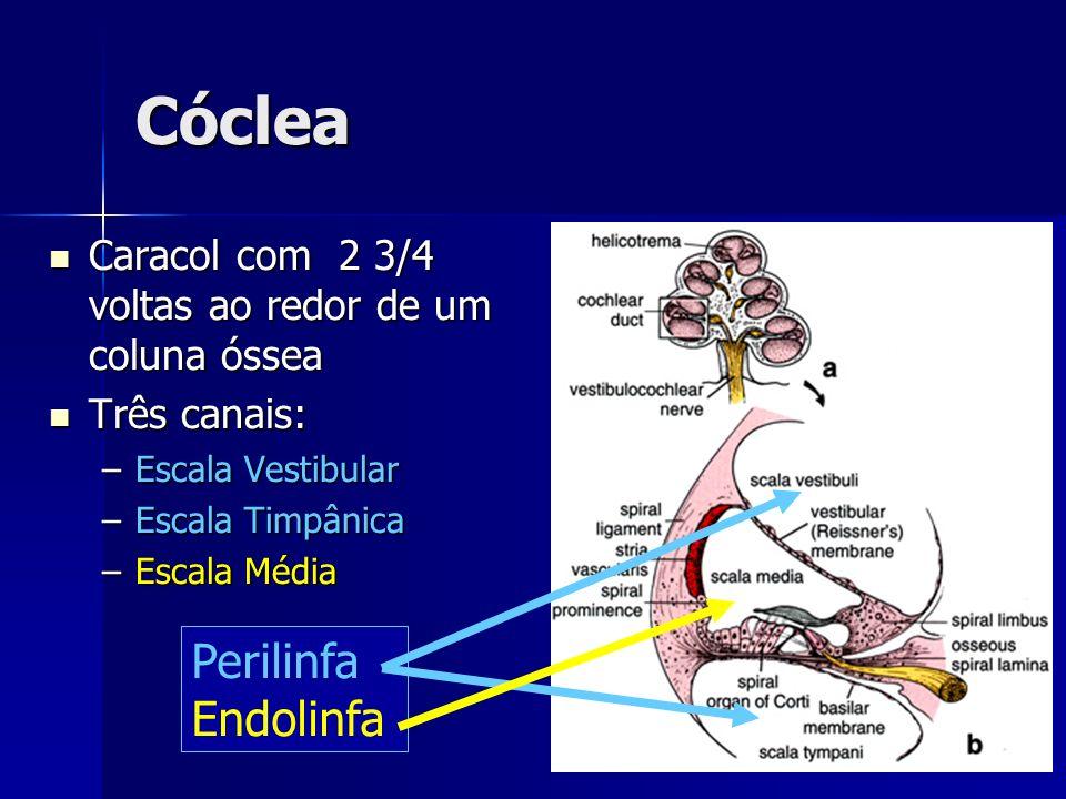 Cóclea Perilinfa Endolinfa