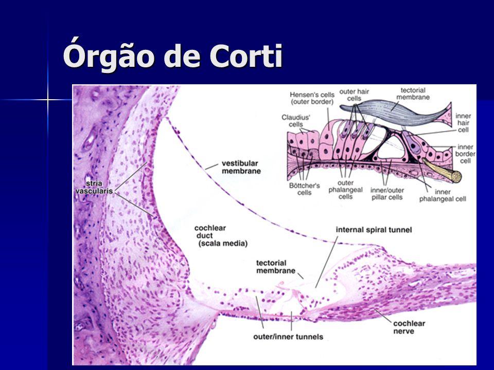 Órgão de Corti