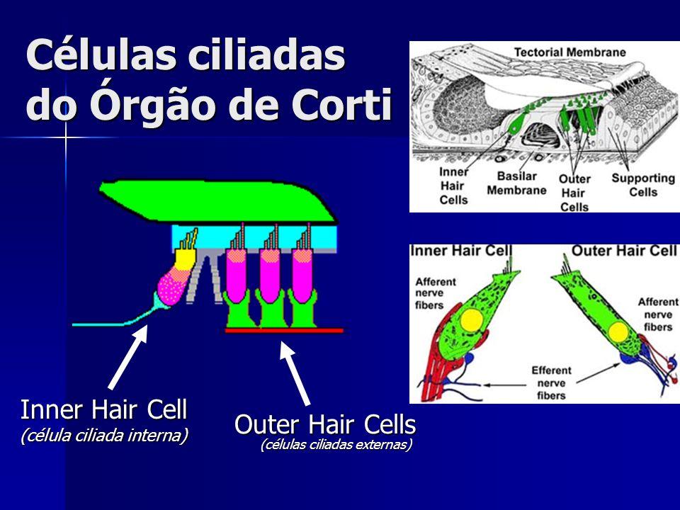 Células ciliadas do Órgão de Corti