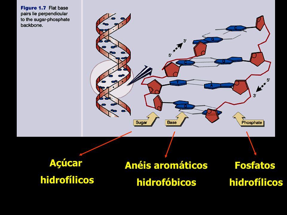 Açúcar hidrofílicos Fosfatos Anéis aromáticos hidrofóbicos