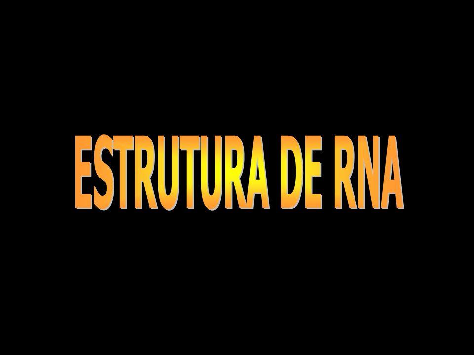 ESTRUTURA DE RNA