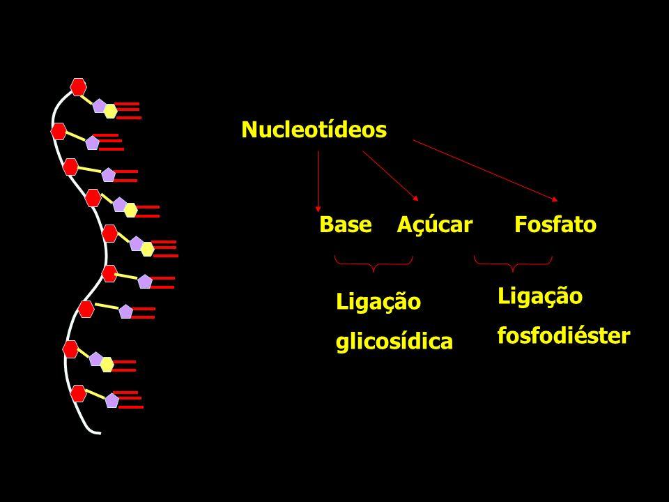 Nucleotídeos Fosfato Base Açúcar Ligação glicosídica fosfodiéster