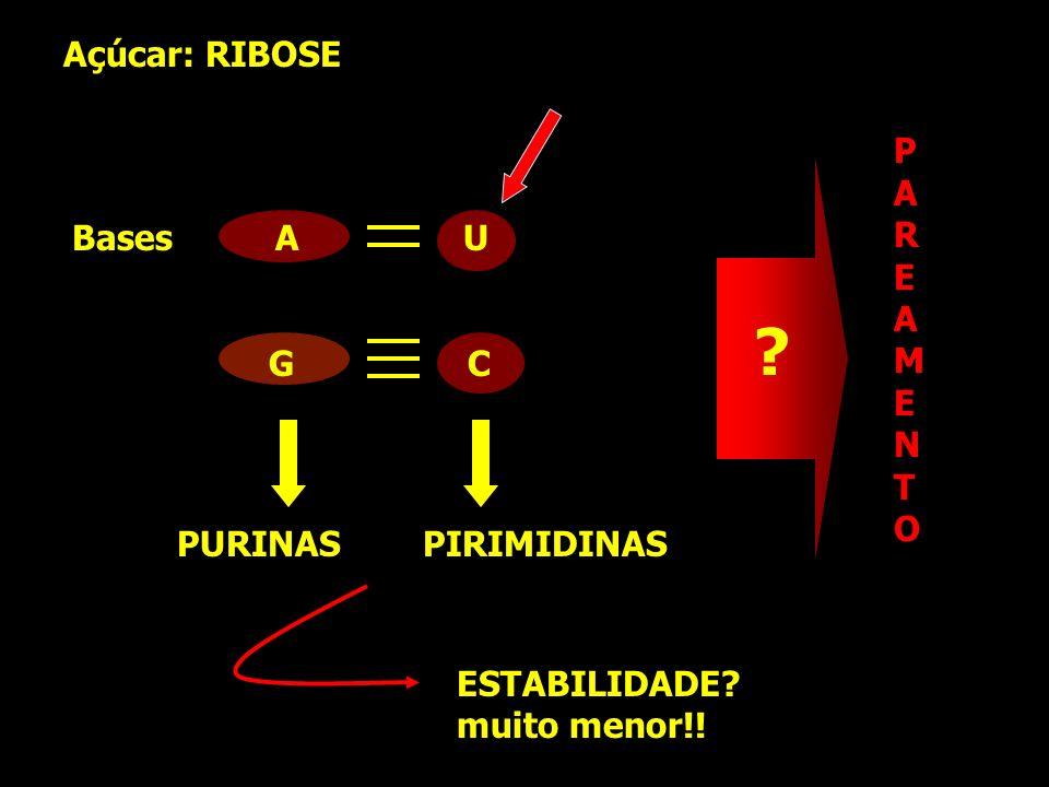 Açúcar: RIBOSE P A R E Bases A U M G C N T O PURINAS PIRIMIDINAS