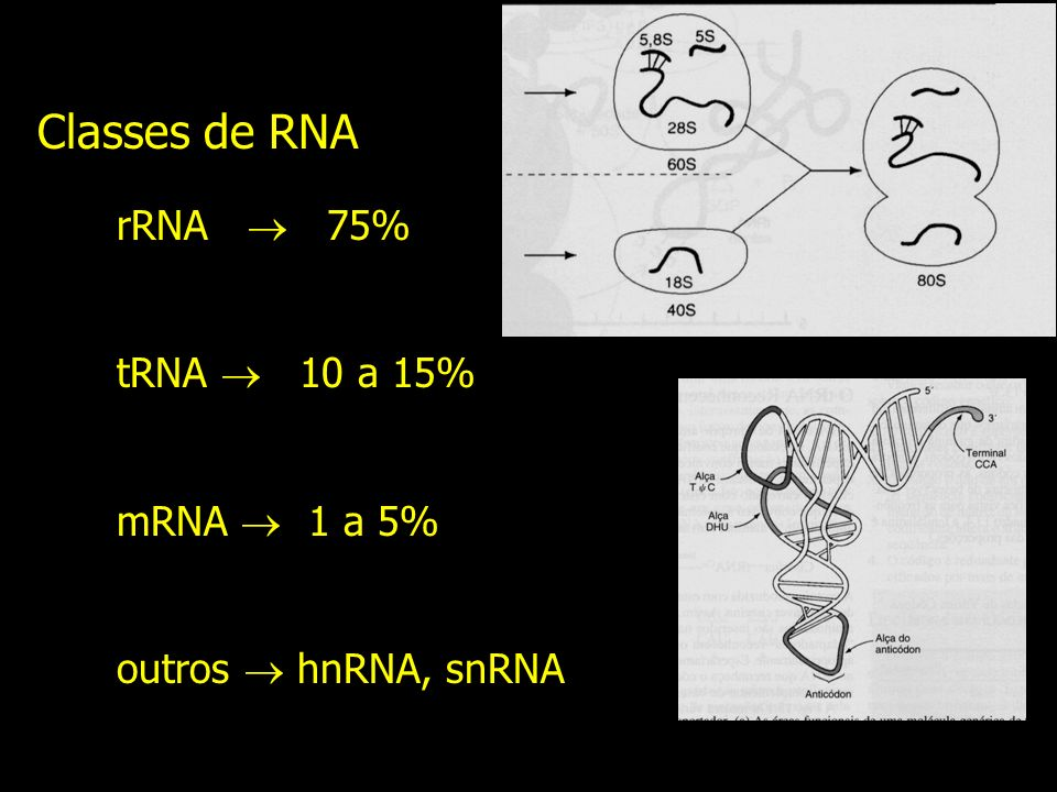 Classes de RNA rRNA  75% tRNA  10 a 15% mRNA  1 a 5%