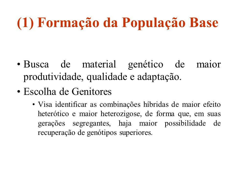 (1) Formação da População Base
