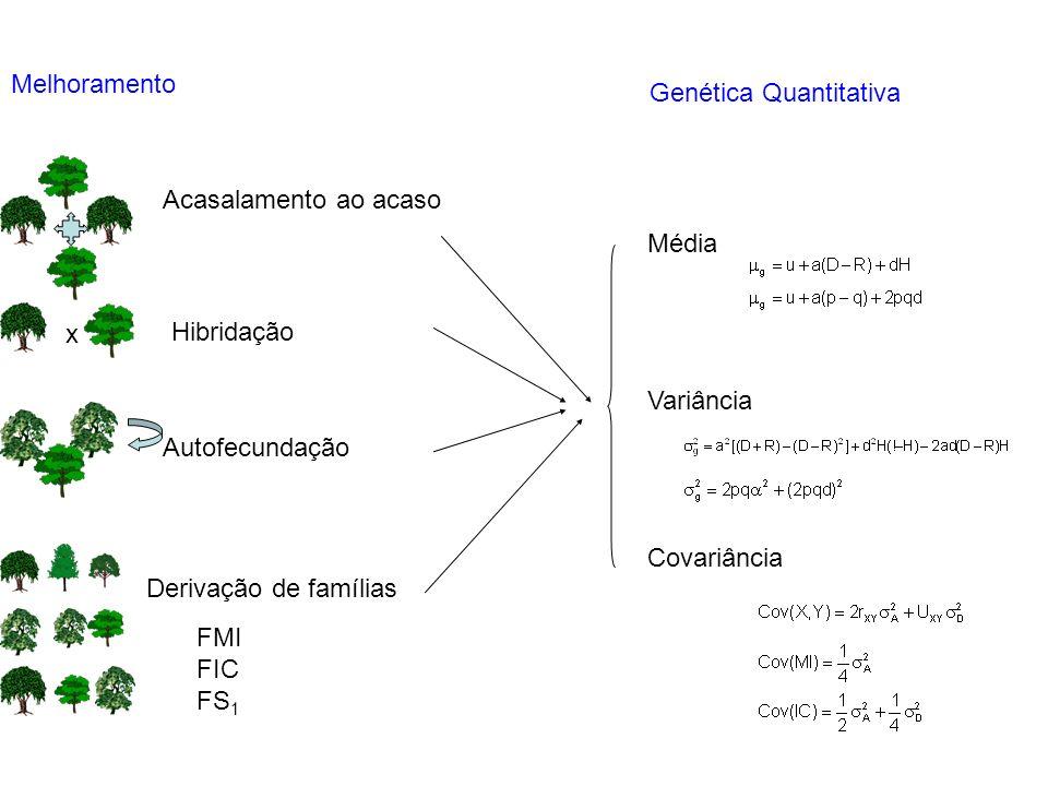 MelhoramentoGenética Quantitativa. Acasalamento ao acaso. Média. Variância. Covariância. x. Hibridação.
