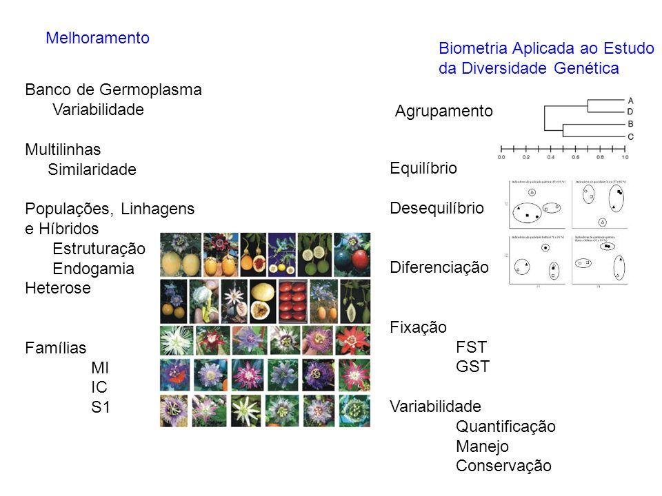 MelhoramentoBiometria Aplicada ao Estudo. da Diversidade Genética. Banco de Germoplasma. Variabilidade.