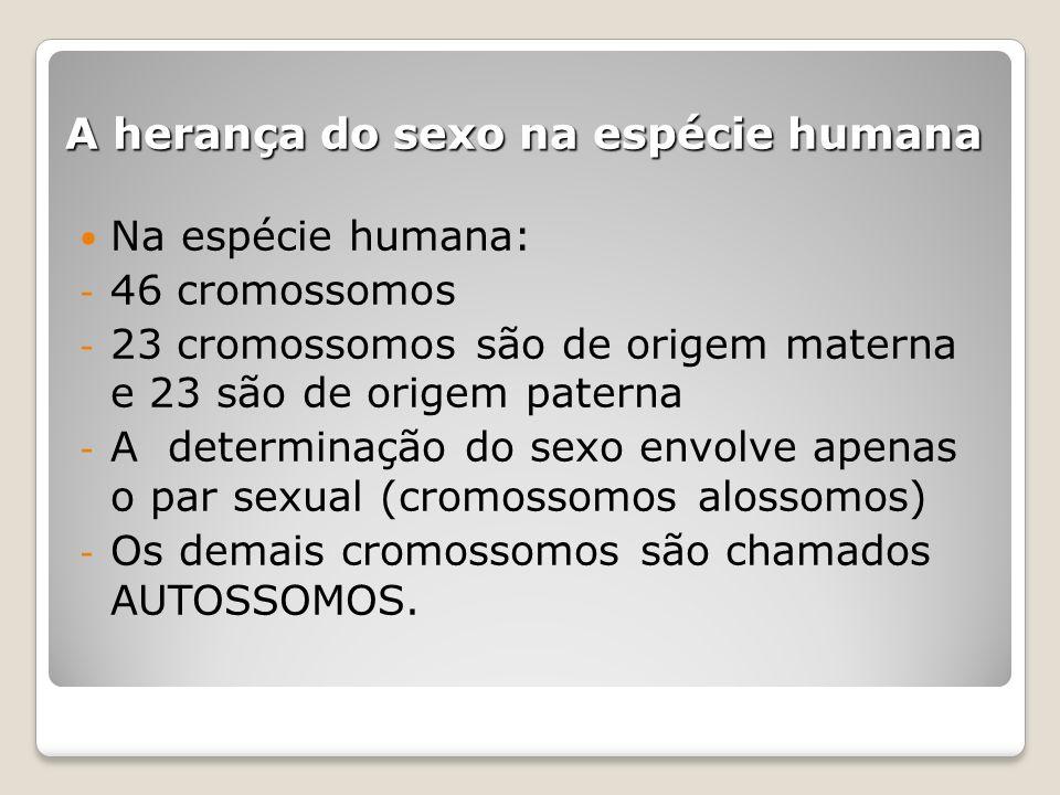 A herança do sexo na espécie humana