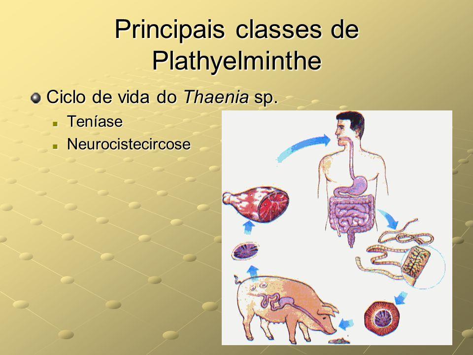 Principais classes de Plathyelminthe
