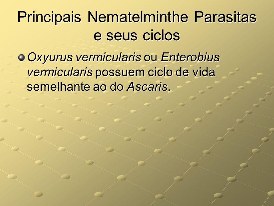 Principais Nematelminthe Parasitas e seus ciclos