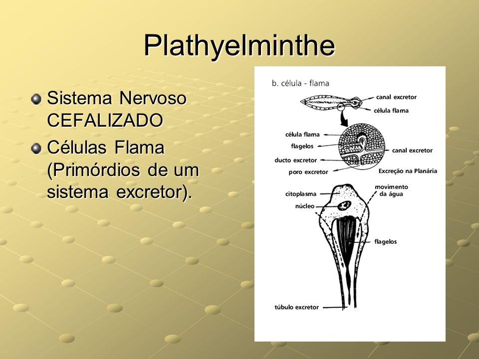 Plathyelminthe Sistema Nervoso CEFALIZADO