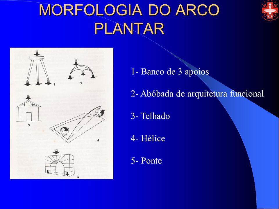 MORFOLOGIA DO ARCO PLANTAR
