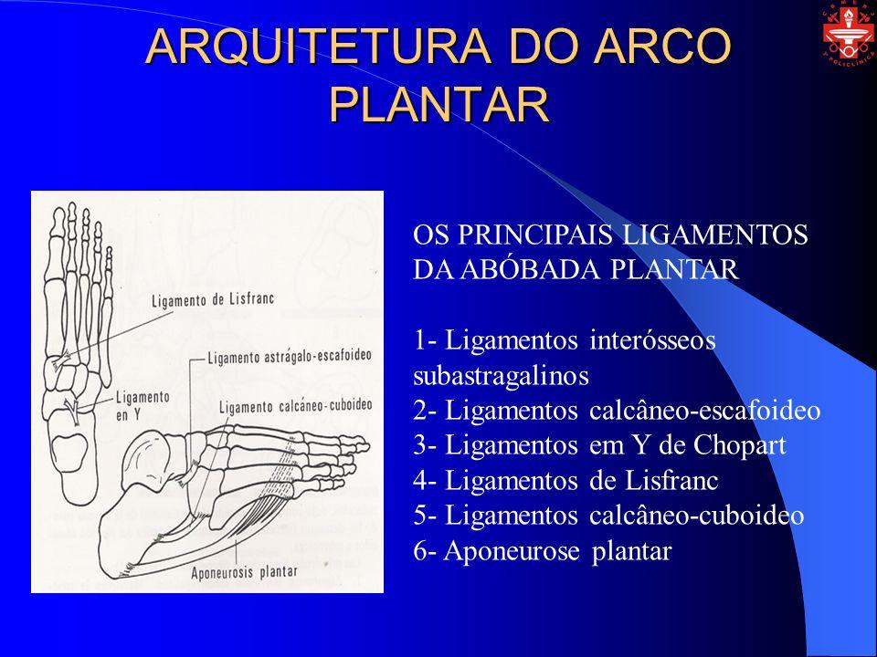 ARQUITETURA DO ARCO PLANTAR