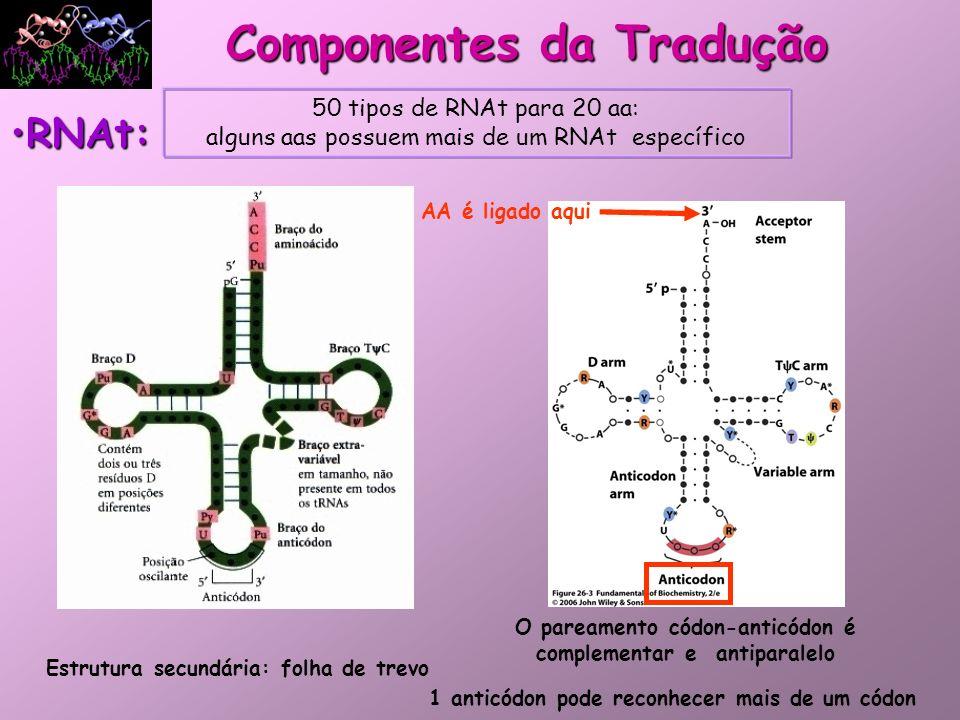 Componentes da Tradução