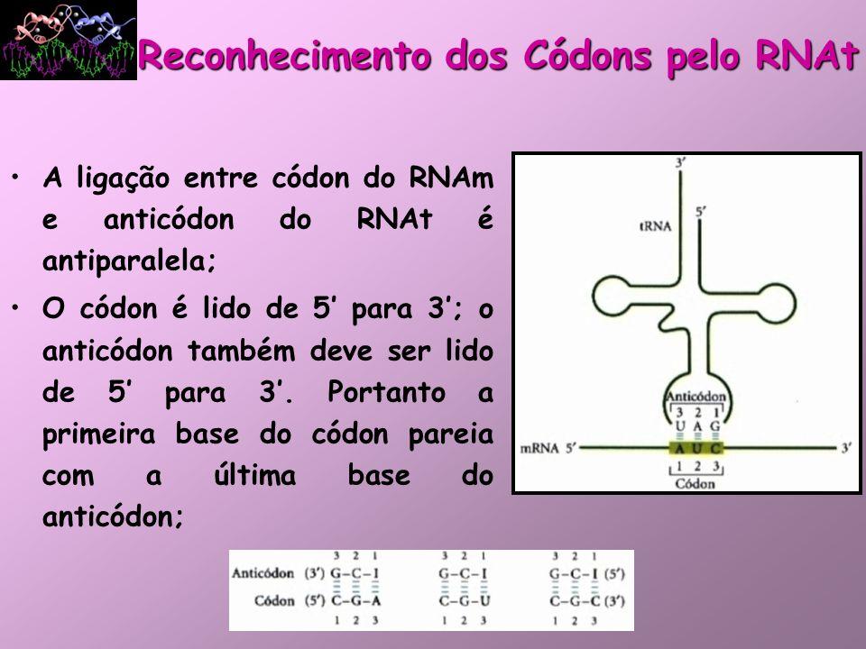 Reconhecimento dos Códons pelo RNAt