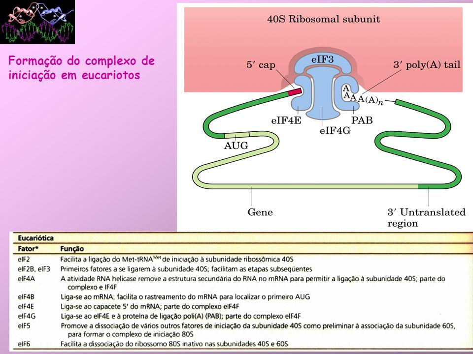 Formação do complexo de iniciação em eucariotos