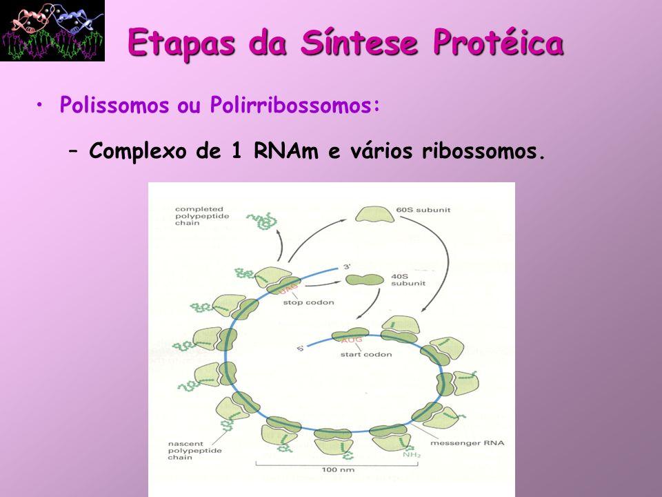 Etapas da Síntese Protéica