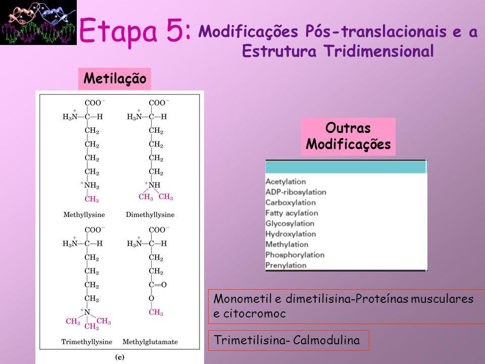 Modificações Pós-translacionais e a Estrutura Tridimensional