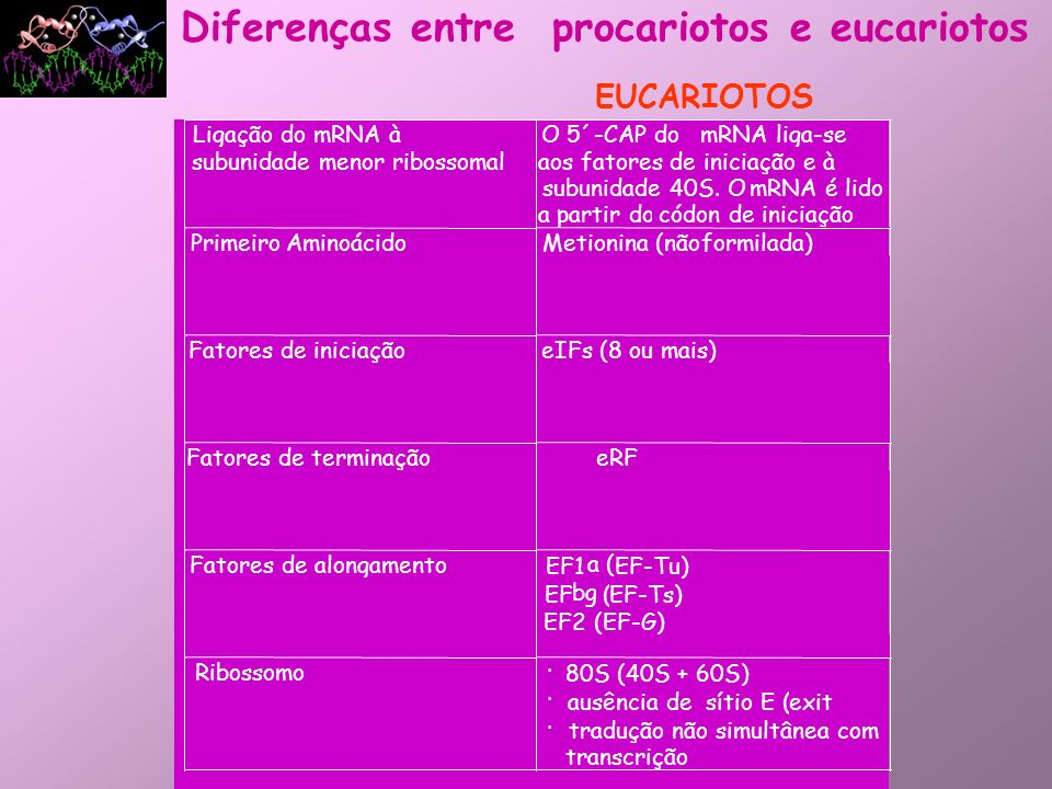 Diferenças entre procariotos e eucariotos