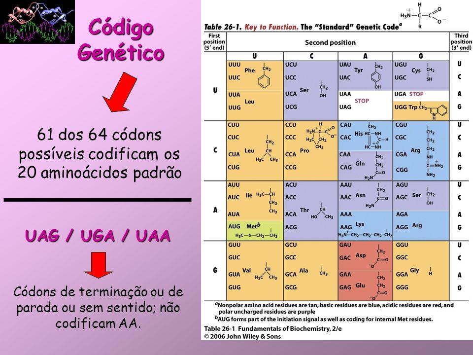 Código Genético 61 dos 64 códons possíveis codificam os 20 aminoácidos padrão. UAG / UGA / UAA.