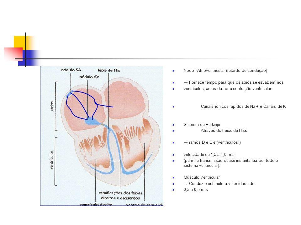Nodo Atrioventricular (retardo de condução)