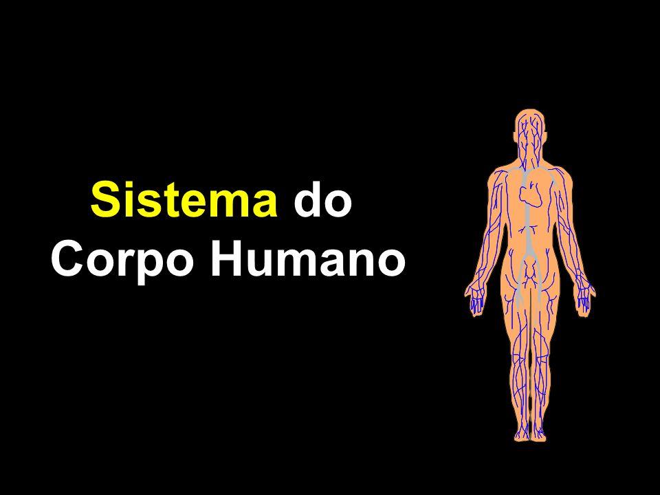 Sistema do Corpo Humano