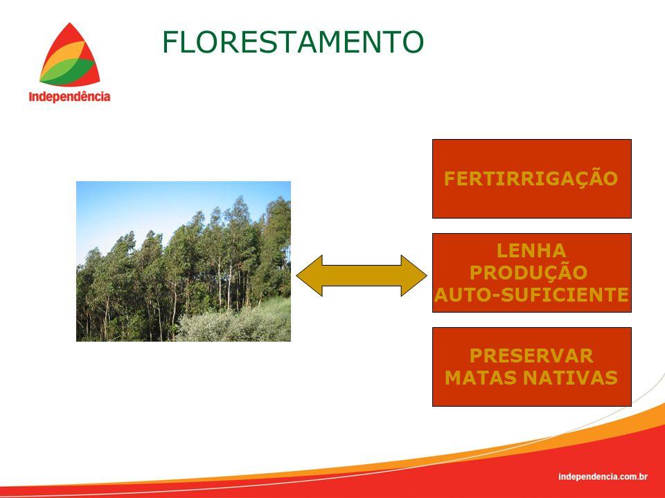 FLORESTAMENTO FERTIRRIGAÇÃO LENHA PRODUÇÃO AUTO-SUFICIENTE PRESERVAR