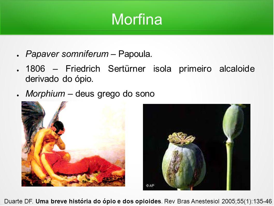 Morfina Papaver somniferum – Papoula.