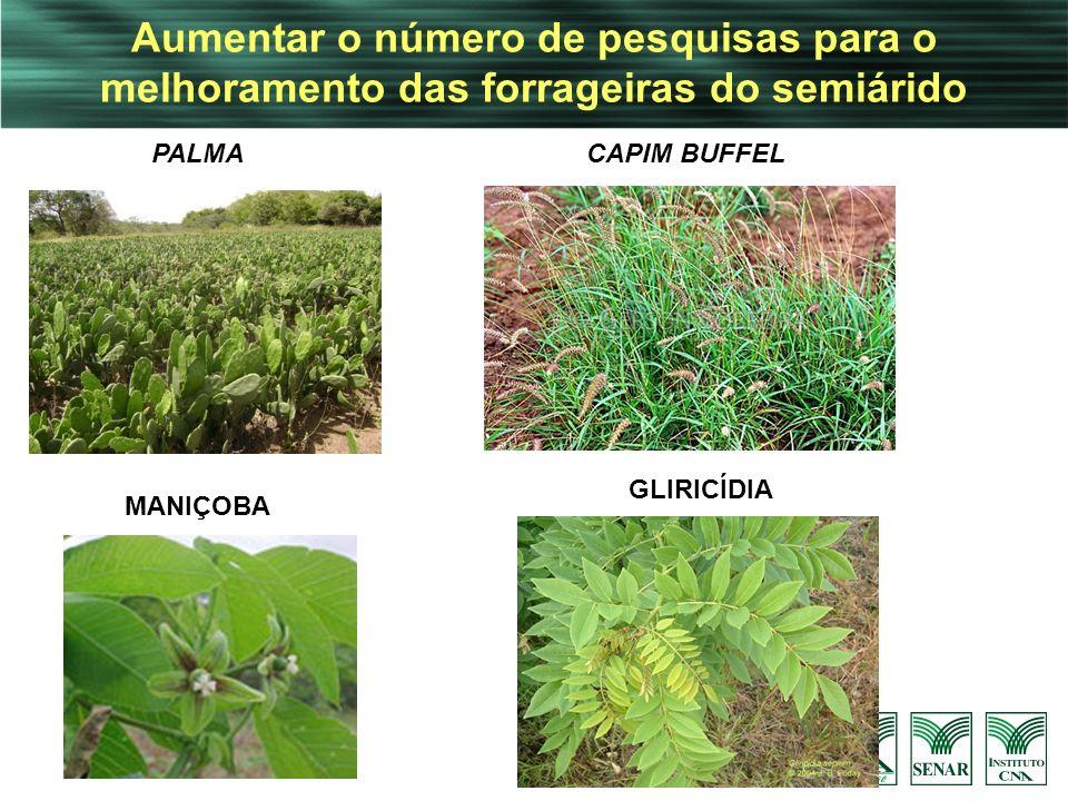 Aumentar o número de pesquisas para o melhoramento das forrageiras do semiárido