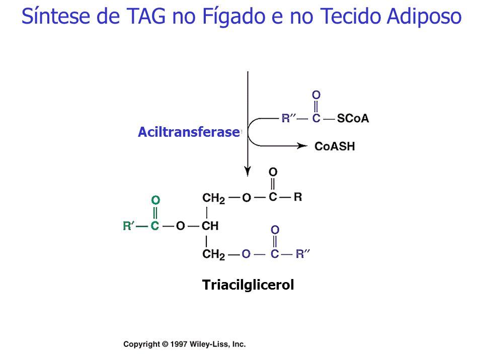 Síntese de TAG no Fígado e no Tecido Adiposo