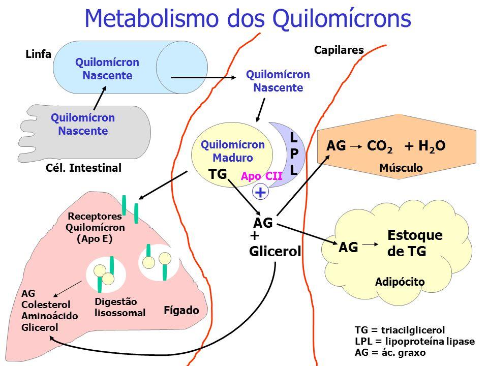 Metabolismo dos Quilomícrons