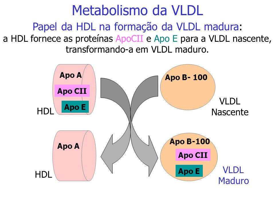 Papel da HDL na formação da VLDL madura:
