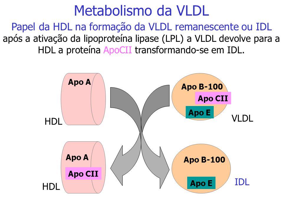 Papel da HDL na formação da VLDL remanescente ou IDL