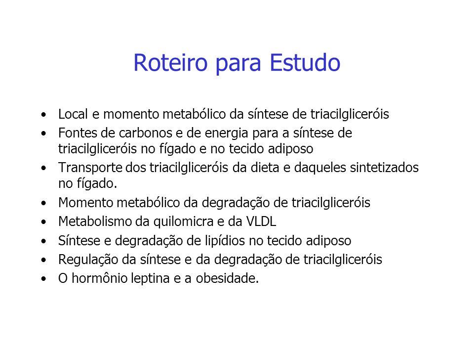 Roteiro para Estudo Local e momento metabólico da síntese de triacilgliceróis.