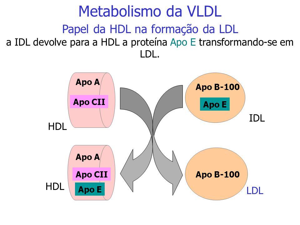 Metabolismo da VLDL Papel da HDL na formação da LDL