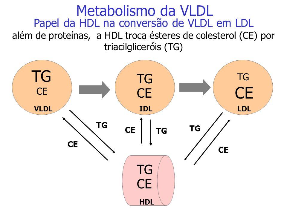 Papel da HDL na conversão de VLDL em LDL