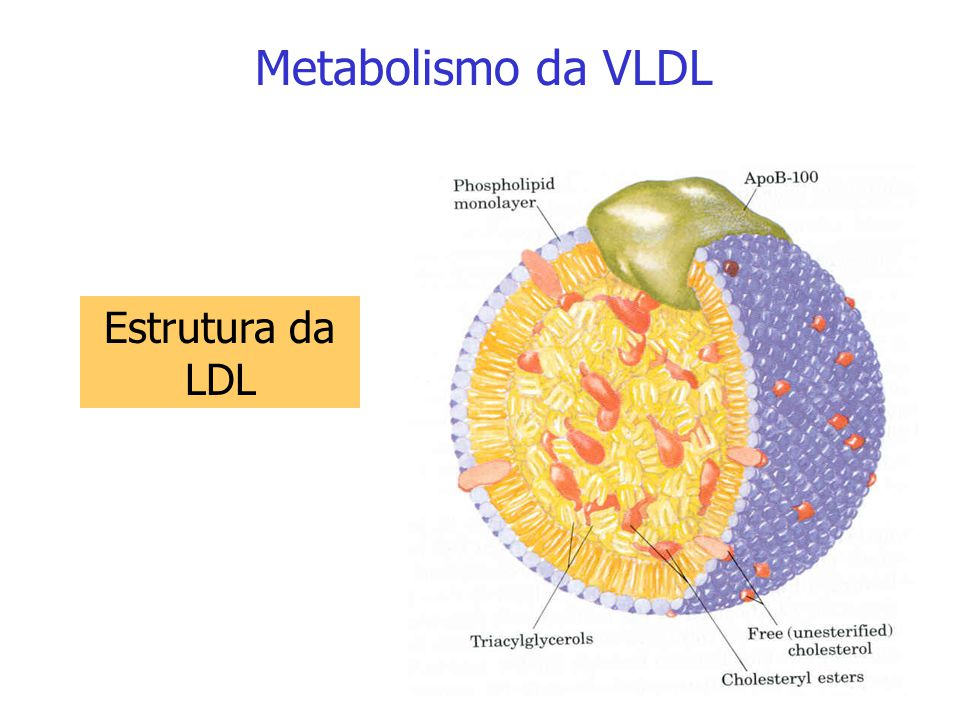 Metabolismo da VLDL Estrutura da LDL