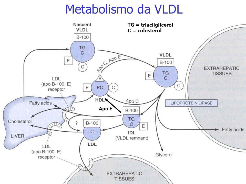 Metabolismo da VLDL TG = triacilglicerol C = colesterol Apo E