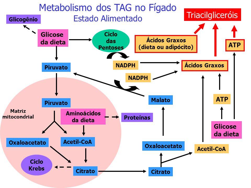 Metabolismo dos TAG no Fígado