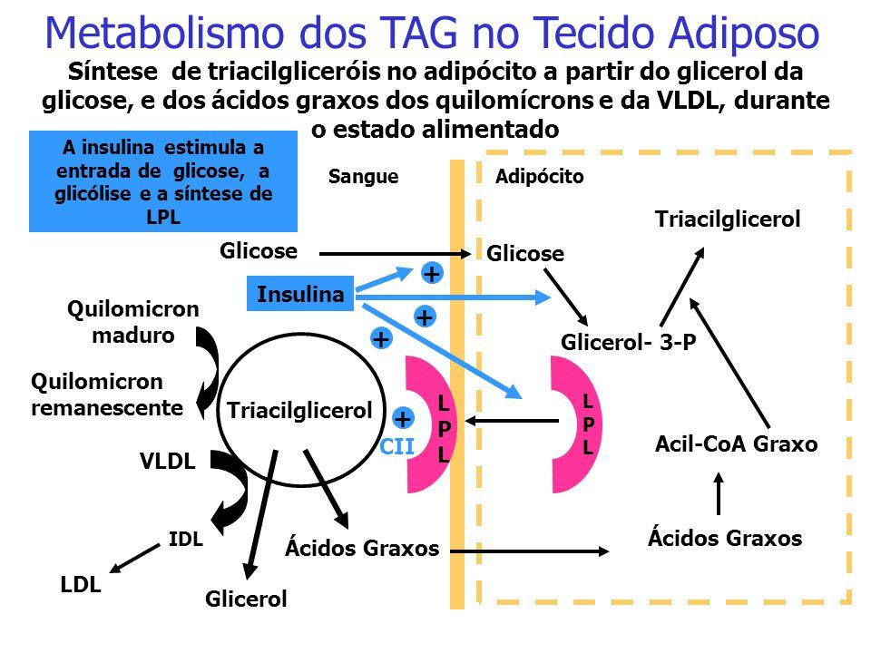 Metabolismo dos TAG no Tecido Adiposo
