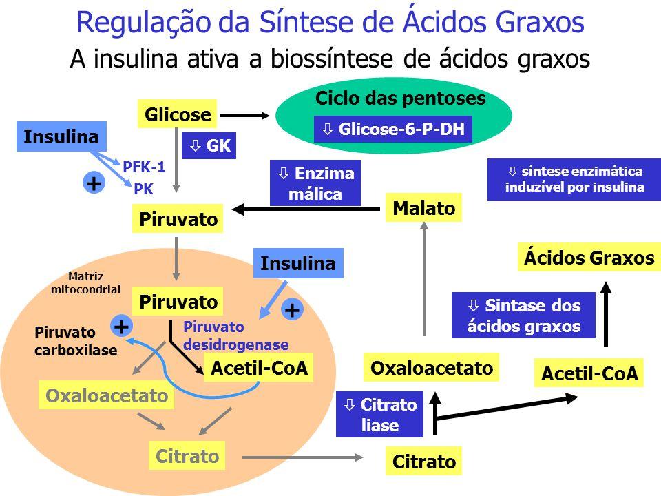 Regulação da Síntese de Ácidos Graxos