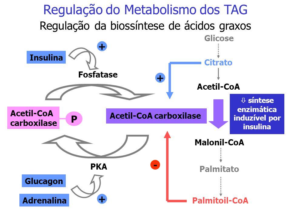 Regulação do Metabolismo dos TAG