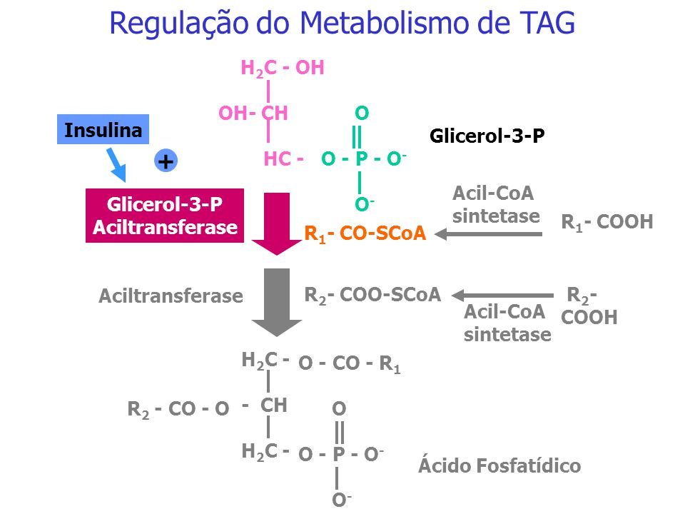 Regulação do Metabolismo de TAG