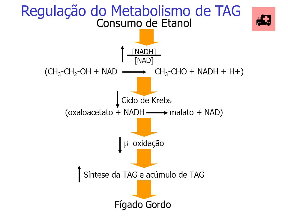  Regulação do Metabolismo de TAG Consumo de Etanol Fígado Gordo