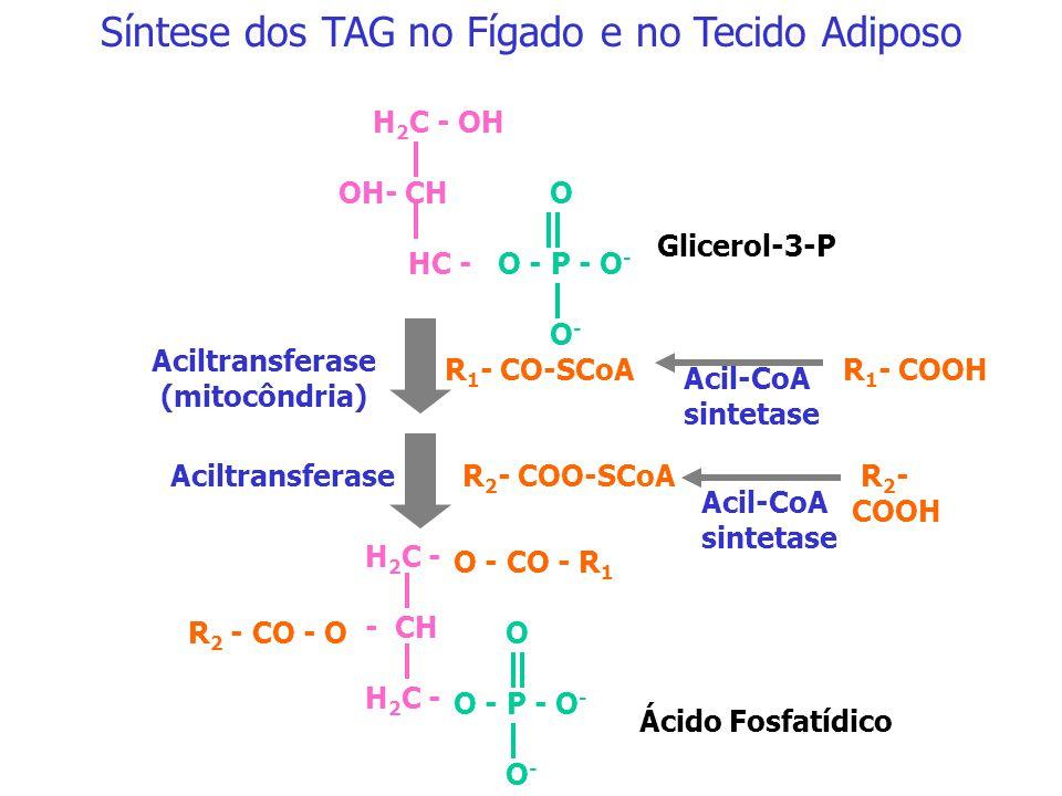 Síntese dos TAG no Fígado e no Tecido Adiposo