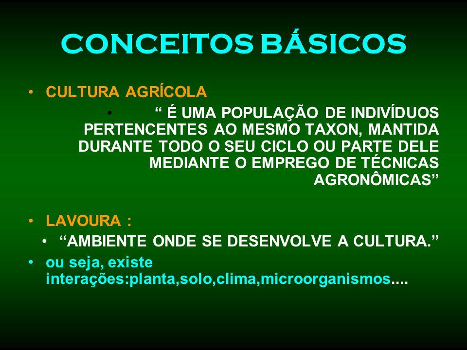 CONCEITOS BÁSICOS CULTURA AGRÍCOLA