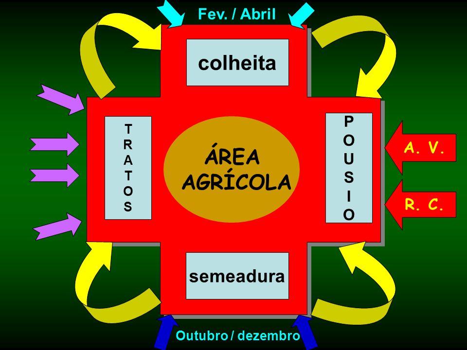 colheita ÁREA AGRÍCOLA semeadura Fev. / Abril P O A. V. U S I R. C. T
